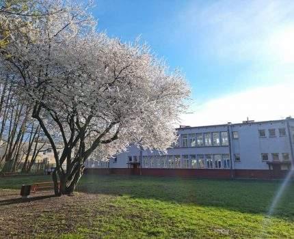 Wiosna w naszej szkole