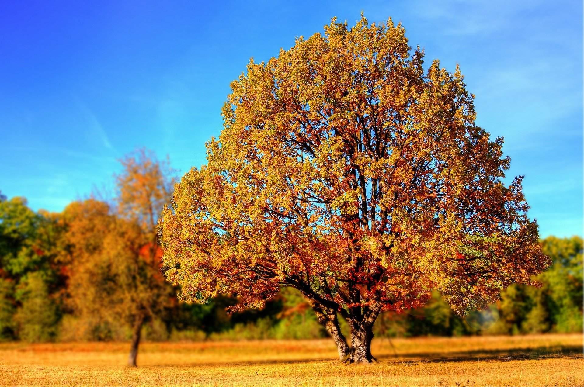 Czy to już jesień?